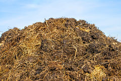 Dung hill Stock Photo