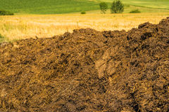 Dung hill in a meadow Royalty Free Stock Image