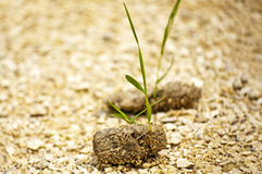Dung with seedling Stock Image