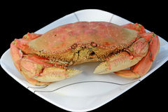 Dunganese Crab Royalty Free Stock Photos