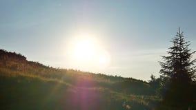 Dungar på gryning Carpathians Ukraina lager videofilmer