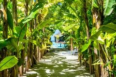 Dunge av det gröna tropiska bananträdet Royaltyfria Foton