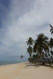 Dunge av kokospalmer Fotografering för Bildbyråer