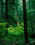 Dunge av patriarkerna, montering Rainier National Park, Washington Arkivbild