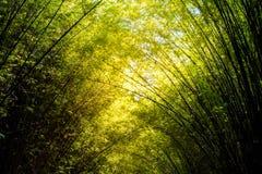 Dunge eller skog för Beautyful bambuväxt Arkivfoto