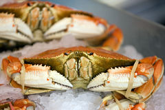 Dungeness crab Stock Photos