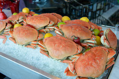 Dungeness crab. Fresh Dungeness crabs in row on ice cube Royalty Free Stock Photos