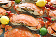 Free Dungeness Crab Royalty Free Stock Photo - 44377135
