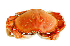 Dungeness Crab Royalty Free Stock Image
