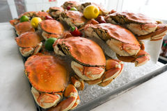 Dungeness crab Royalty Free Stock Photos