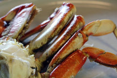 Dungeness Crab Legs Royalty Free Stock Photos