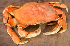 Dungeness crab ready to cook Stock Photos
