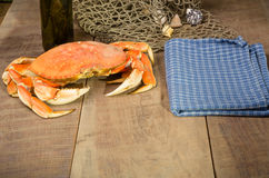 Dungeness crab ready to cook Stock Image