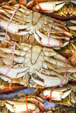Dungeness Crab For Sale royalty free stock photography