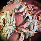 Dungeness Crab in San Francisco Stock Photos
