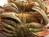 Dungeness Crab Up Close Royalty Free Stock Photos