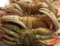 Dungeness Crab Up Close Royalty Free Stock Photos