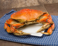 Dungeness Crab on a white plate Stock Image