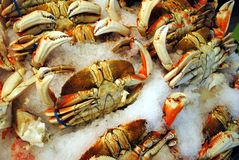 Dungeness Crabs Royalty Free Stock Image