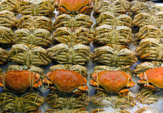 Dungeness Crabs Display at Fresh Seafood Stall Royalty Free Stock Photos