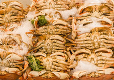 Dungeness Crabs Royalty Free Stock Images