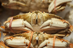 Dungeness Crabs in a fisherman market Royalty Free Stock Photos
