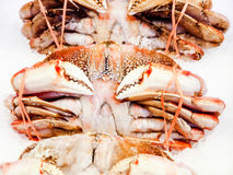 Dungeness Crabs on ice Stock Photos