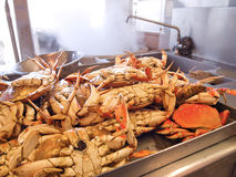 Dungeness Crabs In Kitchen Stock Images