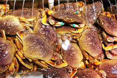 Dungeness crabs Royalty Free Stock Photos