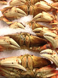 Dungeness Crabs Up Close Royalty Free Stock Photo