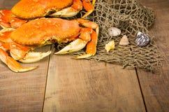 Dungeness krab przygotowywający gotować Fotografia Stock