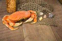 Dungeness krab przygotowywający gotować Zdjęcie Royalty Free