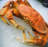 Dungeness-Krabbe Lizenzfreie Stockfotos