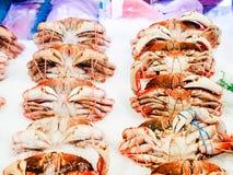 Dungeness kraby na lodzie Zdjęcia Stock