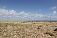 Dungeness Stock Photo
