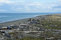 Dungeness spit Royalty Free Stock Photos