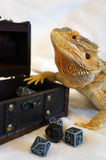 Dungeon Master Lizard. Bearded Dragon suggests to play some die Royalty Free Stock Photos