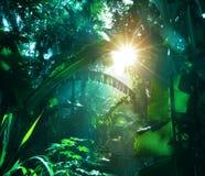 Dżungla Zdjęcia Stock