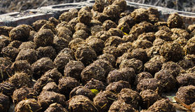 Dungs Roll. Group of some dungs boll or roll. Click an Indian farmer's house stock image