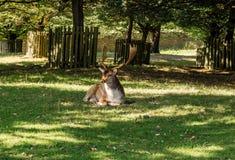 Dunham deer Stock Images