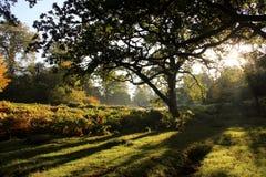Dunham Massey Cheshire Royalty Free Stock Photo