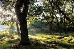 Dunham Massey Cheshire Royalty Free Stock Image