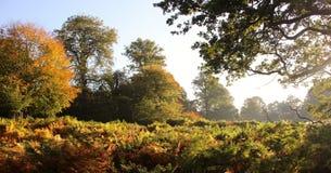 Dunham Massey Cheshire. Autumn morning, Dunham Massey Cheshire Stock Photo