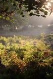Dunham Massey Cheshire. Autumn morning, Dunham Massey Cheshire Stock Images