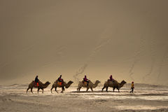 DUNHUANG, 11 CHINA-MAART: De groep toeristen berijdt binnen kamelen Stock Foto's