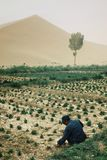 local farmer working on a small garden at the edge of the sand dune desert stock photos