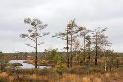 Dunika, Lettland Stockbilder