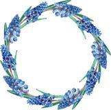 Dunkelblauer runder mit Blumenrahmen des Aquarells Ein Kranz gemacht von den ersten Frühlingsblumen lokalisiert auf weißem Hinter lizenzfreie abbildung