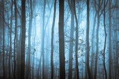 Dunkelblaues gespenstisches forrest mit Bäumen Stockbild