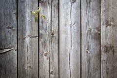 Dunkelbrauner strukturierter hölzerner Hintergrund des alten Schmutzes, kleiner Sprössling der Blume wächst durch Planken, vertik lizenzfreies stockbild